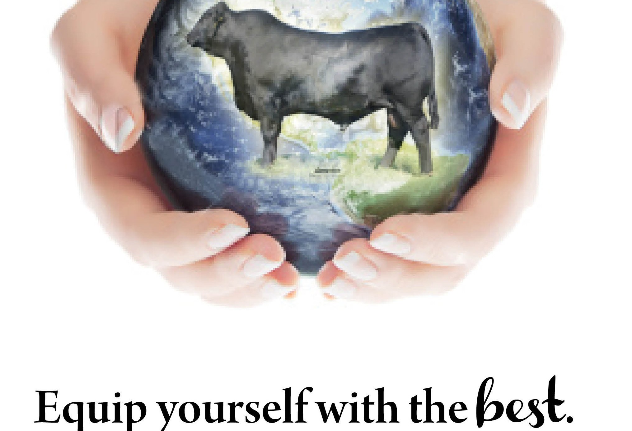 American Marketing Services - Cattle for Sale – Bulls For Sale ...