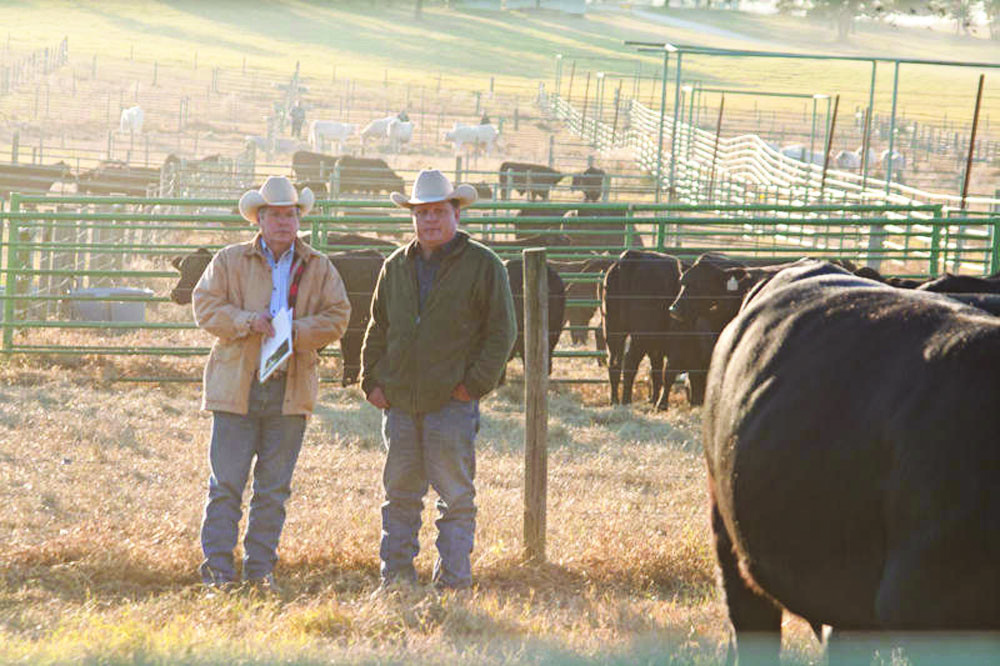 Bull Buyer's Bill of Rights