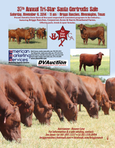 37th Annual Tri-Star Santa Gertrudis Females Sale