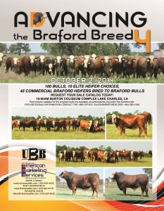 Advancing the Breed IV – Braford Bulls & Females