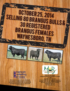 Miller Brangus Fall Bull Sale