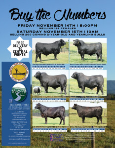 "Salacoa Valley ""Buy the Numbers"" Brangus Bulls & Females"