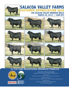 "Salacoa Valley Farms Brangus ""Customer Appreciation Sale"" Bulls & Females"