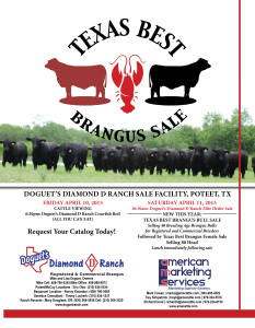 Texas Best Brangus Bull and Female Sale