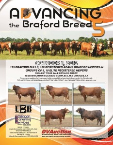 Advancing the Breed Braford Bull & Commercial Female Sale