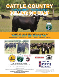 Cattle Country Commercial Replacement Female Sale