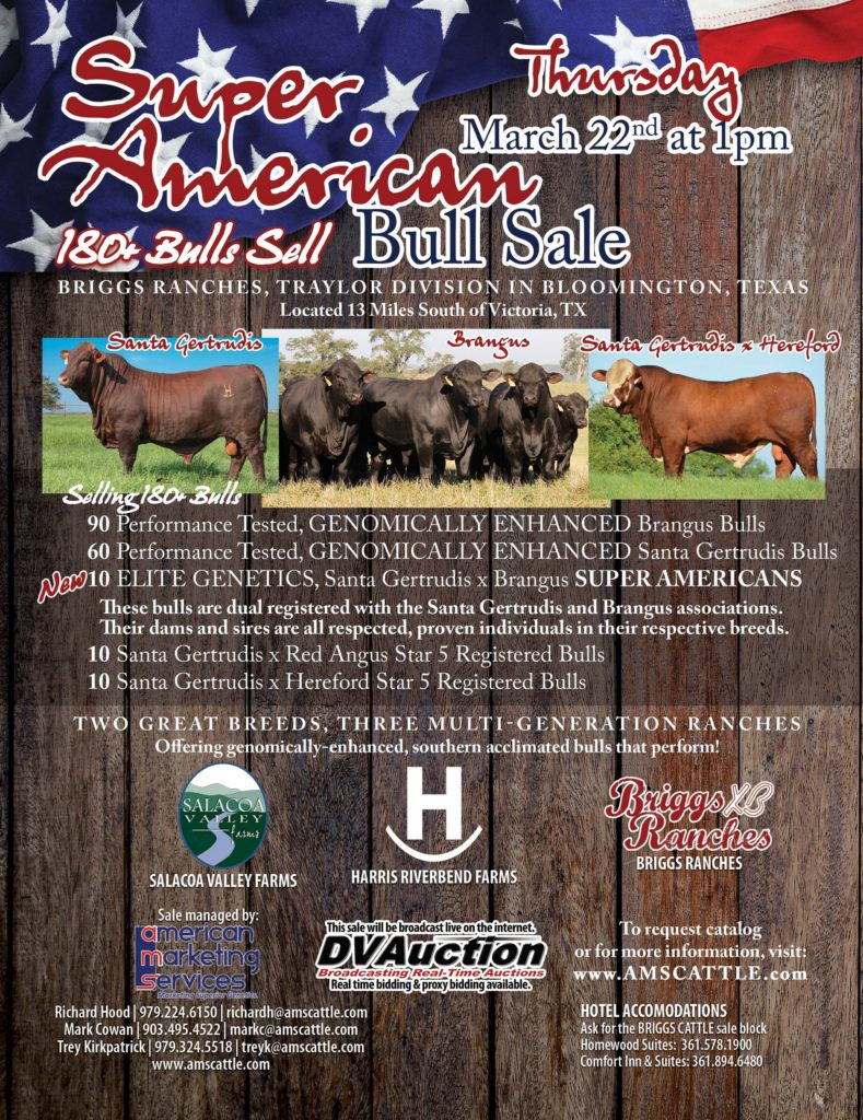 180 Head Super American Bull Sale