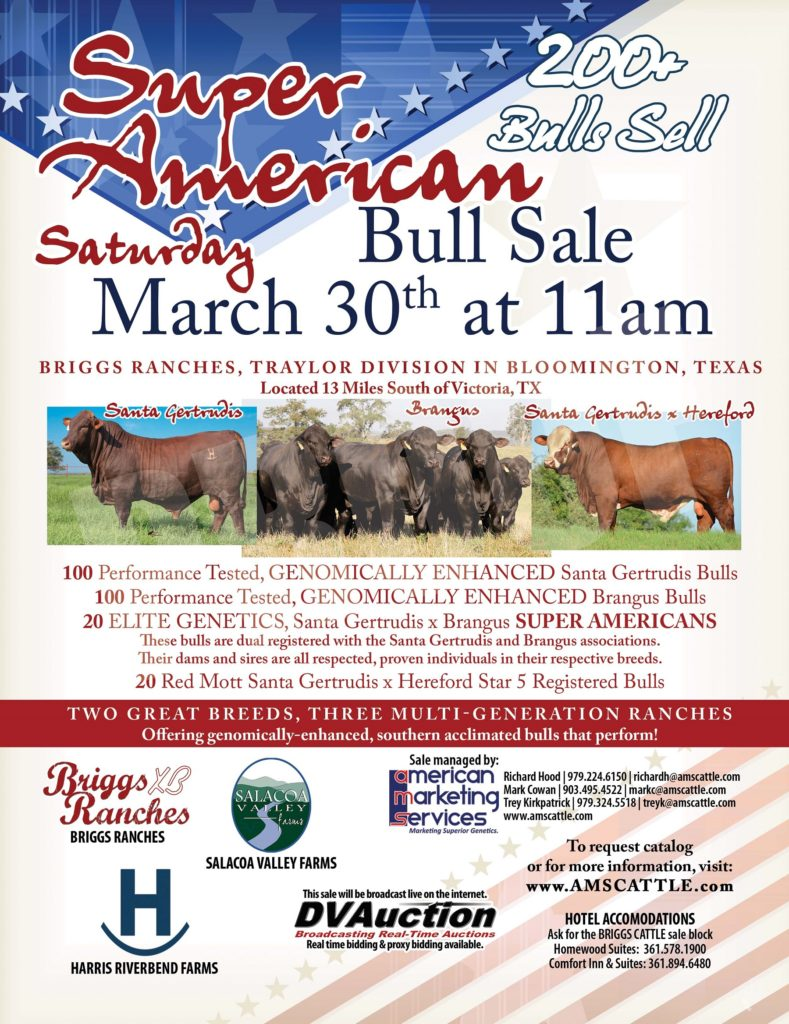 "The ""Super American"" Bull Sale-175+ Bulls Sale"